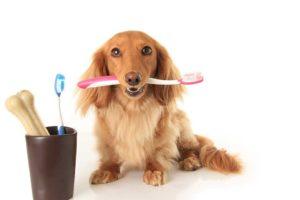 Dentistry-e1540323653896